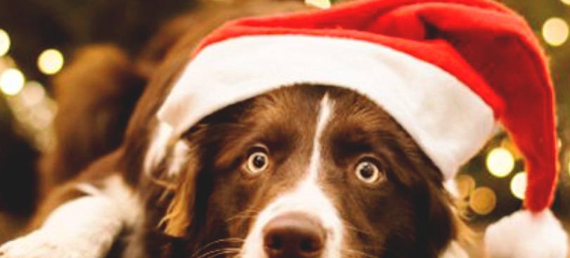 Съемка фото новогоднего корпоратива